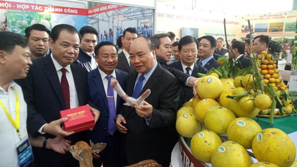 Nhung hươu Hương Sơn được đánh giá cao về chất lượng
