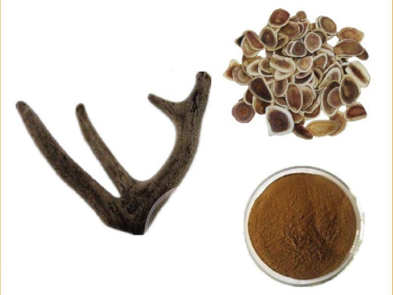 Nhung hươu tán bột SKGold đặc biệt (Hộp 100 Gram)
