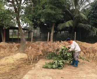Nhung hương Hương Sơn – Thương hiệu quốc gia, chất lượng hàng đầu Việt Nam
